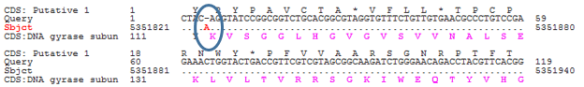 "Figure 4. A sequence that cannot be translated into a protein sequence. There is a dash (""_"") in the Query row, indicating a missing base in the sequence."