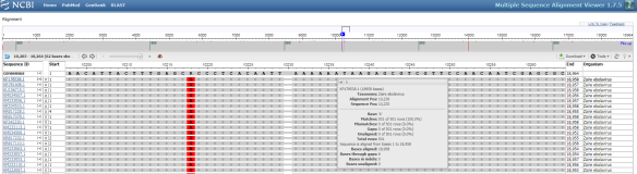 "Figure 6. An Example Multiple Sequence Alignment. A multiple sequence alignment of the results for the example Ebolavirus sequence in Figure 2 is shown. In the top-right of the interface users can select the ""Download"" button to save the results in FASTA format. Additionally, next to the download button, the ""Tools"" button allows users to adjust the coloring scheme used."