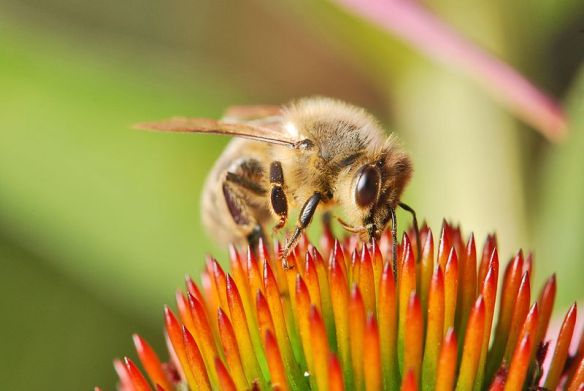 Honey bee rests on a plant